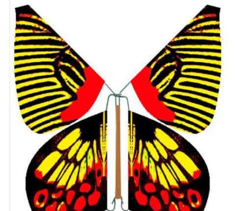 Бабочка вылетают из открытки, открытки пограничника